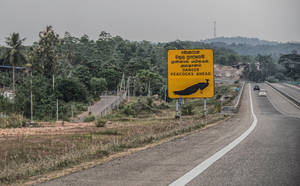 Danger. Sri Lanka by jennystokes