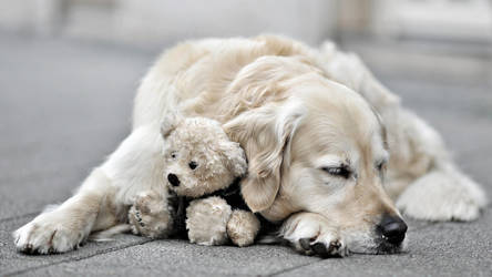 dog with young teddy by derlevi