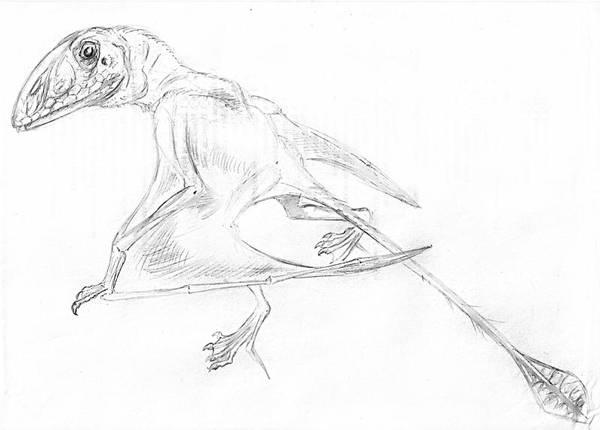 Peteinosaurus by batworker