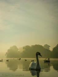 Swan on a Lake by DavidVeevers