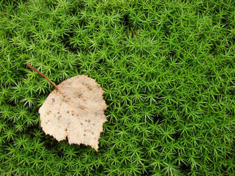 Autumn has come by Juodutia