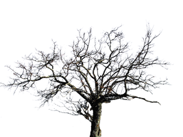 Tree PNG stock by lubman