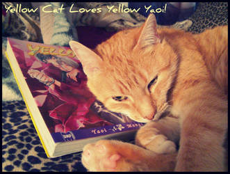Yellow Cat loves Yellow Yaoi by Isika