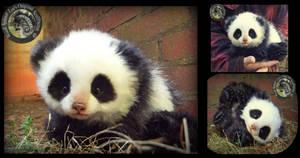 SOLD Handmade Poseable Baby Panda! Orio by Wood-Splitter-Lee