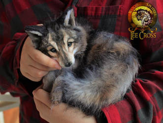 Handmade Poseable Wolf Sold by Wood-Splitter-Lee