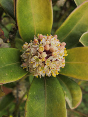 Little Flowers of plant by FloraLoveNL
