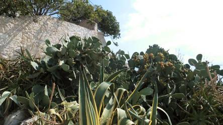 Cactus 7 by FloraLoveNL