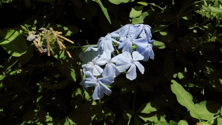 Light blue flowers by FloraLoveNL