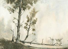 Pines by mwolski