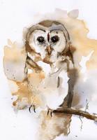 Owl II by mwolski