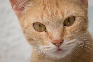 Stray cat by Reiep