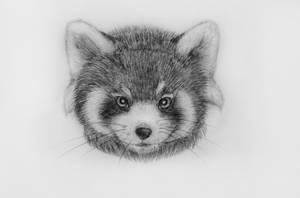 Red panda 5 by Panda-kiddie