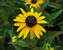 Yellow-close-2005-1280x1024 by celtic-chrys