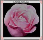 A ROSE FOR JEN by LOURDES-LAVEAU