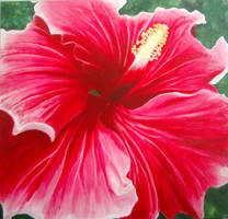 Hibiscus by JBWolfer