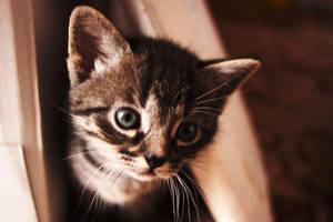 Kittens - 5 weeks XV by Lillian-Bann
