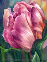 Tulip by Lillian-Bann