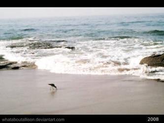 Bird by WhatAboutALLISON