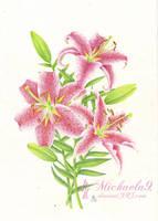+ Lilies + by Michaela9