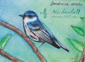 30. ACEO - Dendroica cerulea by Michaela9