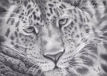 Amur Leopard by Michaela9