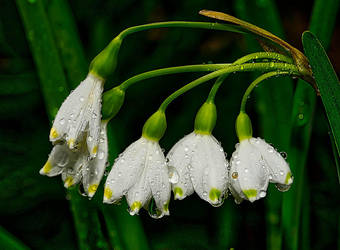 Unknown flower after a shower. by nolra