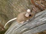 Mouse! by Rayaya