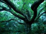 the great oak by Estruda