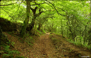 Cornish Path by Estruda
