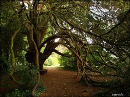 tree mendous by Estruda