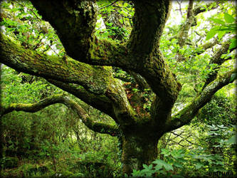 The Grand Old Oak Tree by Estruda