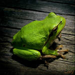 Another tree frog by D-Lory