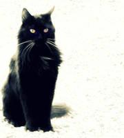 Le chat noir by Cinnnamon