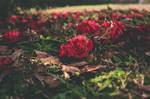 Flowers Decaying by Casey944