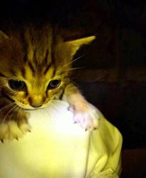 Kitty by Hebiak