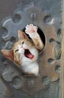 Kitty thru a keyhole by gw3n