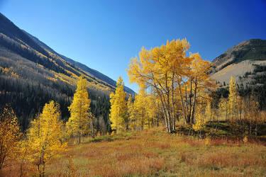 Golden Tree by porbital