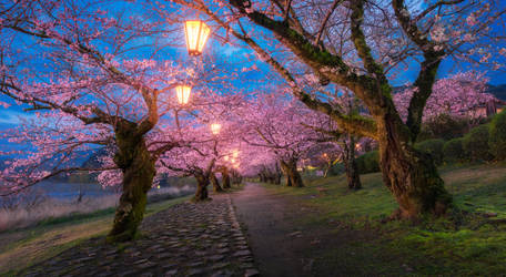 Pink Road by porbital