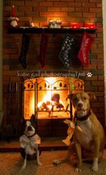 A pup holiday by rakastajatar
