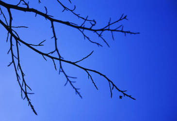Branches II by jpwplus