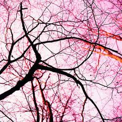 pink sky at night by jpwplus