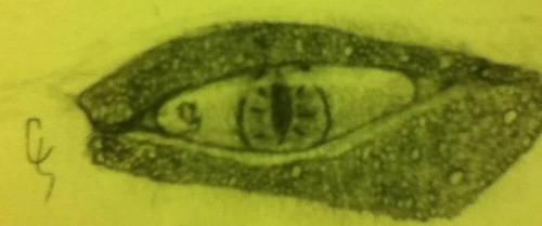 Dragon Eye by Chiiovanni