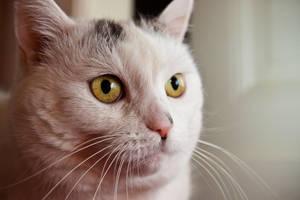8 - grandmas cat by Alandil-Lenard