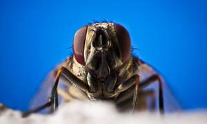 15 - King of flies by Alandil-Lenard