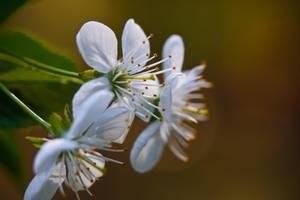 Just flowers by Alandil-Lenard