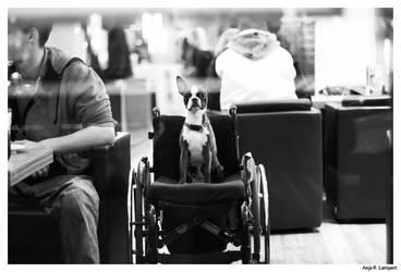 Doggy by Ikarisou