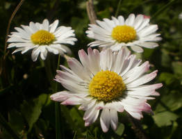 White macro by paully93