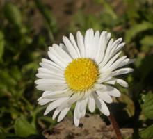 White macro 3 by paully93