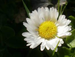 White macro 7 by paully93
