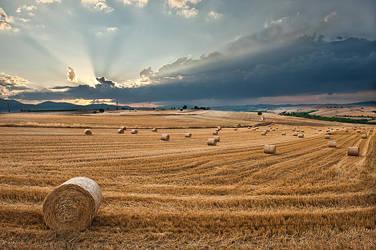 Hay balls. by NickKoutoulas